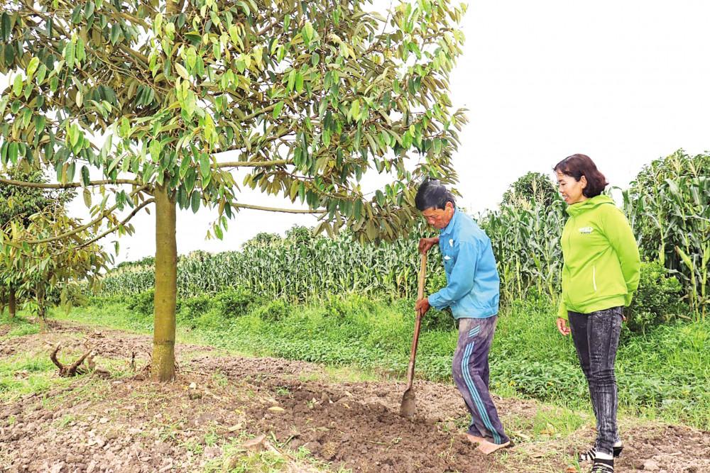 Chị Châm (bên phải) thường xuyên lui tới, động viên các xã viên thực hiện quy trình sản xuất nông nghiệp theo tiêu chuẩn VietGAP.