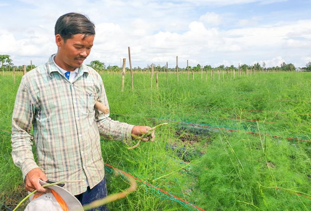 Anh Nguyễn Ri Bo (ấp Đông Thạnh, xã Đông Hiệp, huyện Cờ Đỏ) giới thiệu trang trại trồng măng tây xanh của gia đình.
