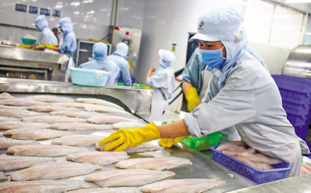Chế biến cá tra xuất khẩu tại Công ty TNHH Công nghiệp thủy sản Miền Nam, Khu công nghiệp Trà Nóc 2, TP Cần Thơ.