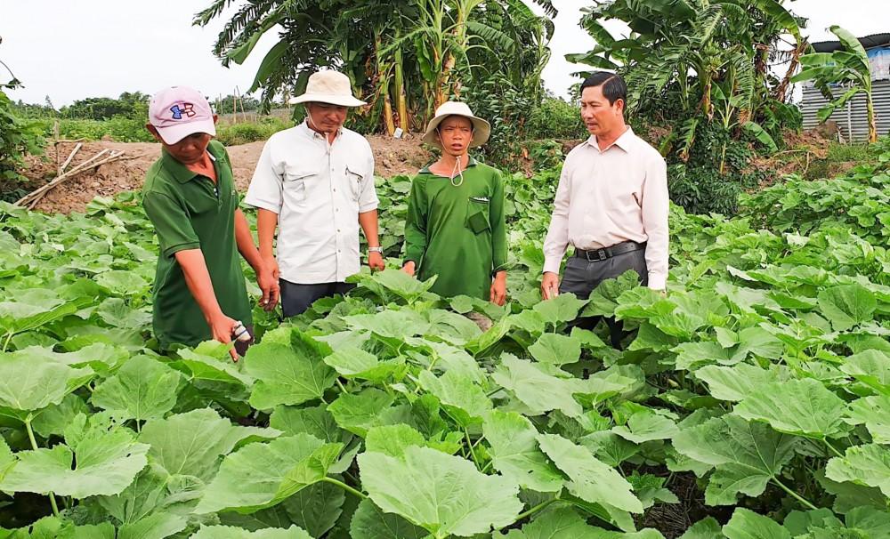 Lãnh đạo HND huyện Cờ Đỏ thăm mô hình trồng màu trên địa bàn.