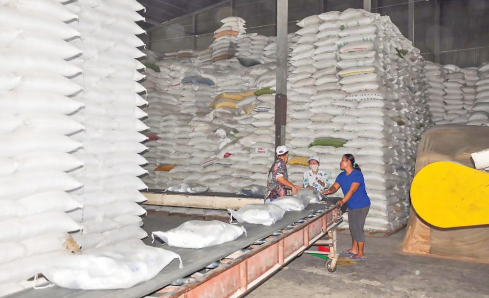 Doanh nghiệp trên địa bàn TP Cần Thơ dự trữ lúa, gạo đảm bảo nguồn hàng phục vụ thị trường xuất khẩu.