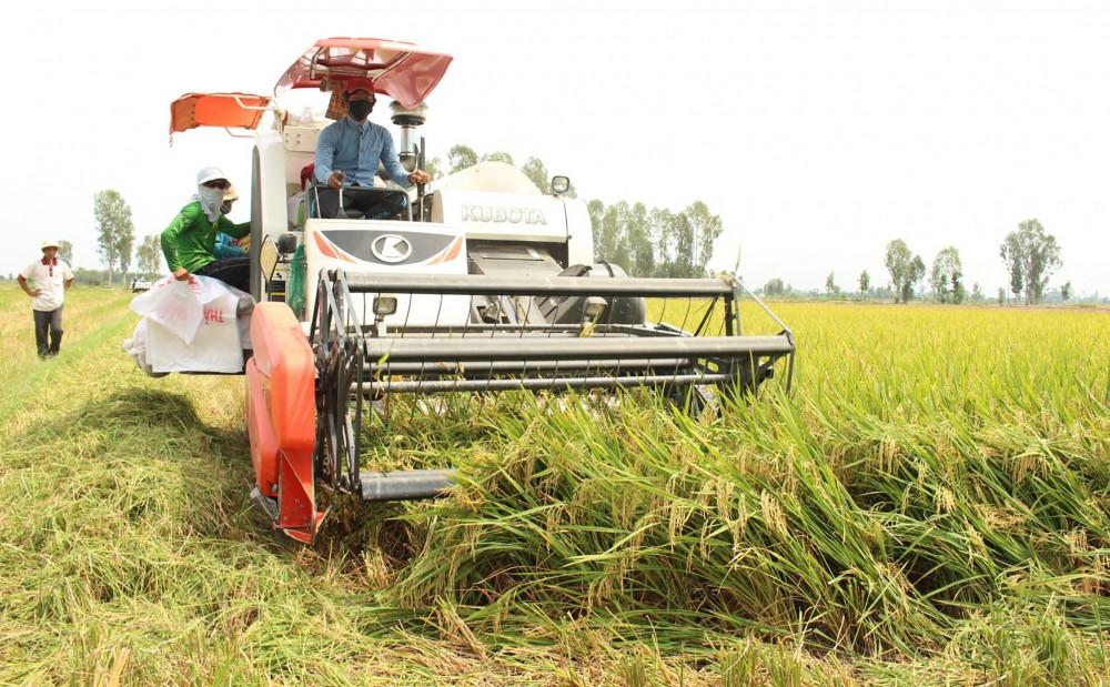 Vùng ĐBSCL đang hình thành nền nông nghiệp chất lượng cao, đóng góp đáng kể vào kim ngạch xuất khẩu của đất nước. Trong ảnh: Thu hoạch lúa ở tỉnh Đồng Tháp.