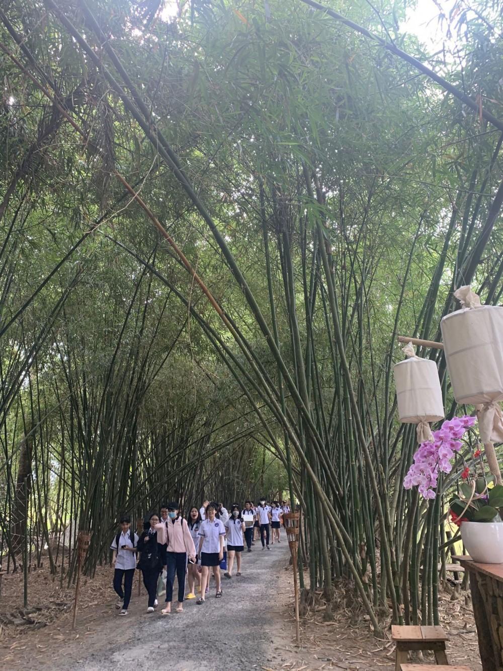 Khách du lịch dạo quanh dưới hàng tre râm mát.