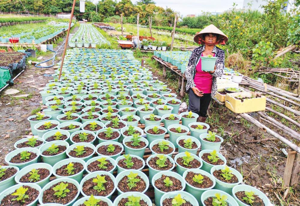 Trồng hoa, kiểng tại một hộ dân ở Làng hoa kiểng Phó Thọ - Bà Bộ ở quận Bình Thủy, TP Cần Thơ.