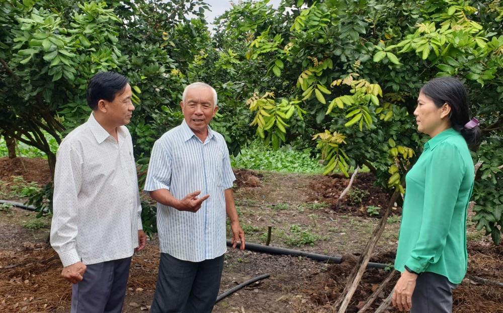 Cán bộ HND thành phố, xã Thới Hưng tham quan HTX nhãn Thái Thanh.