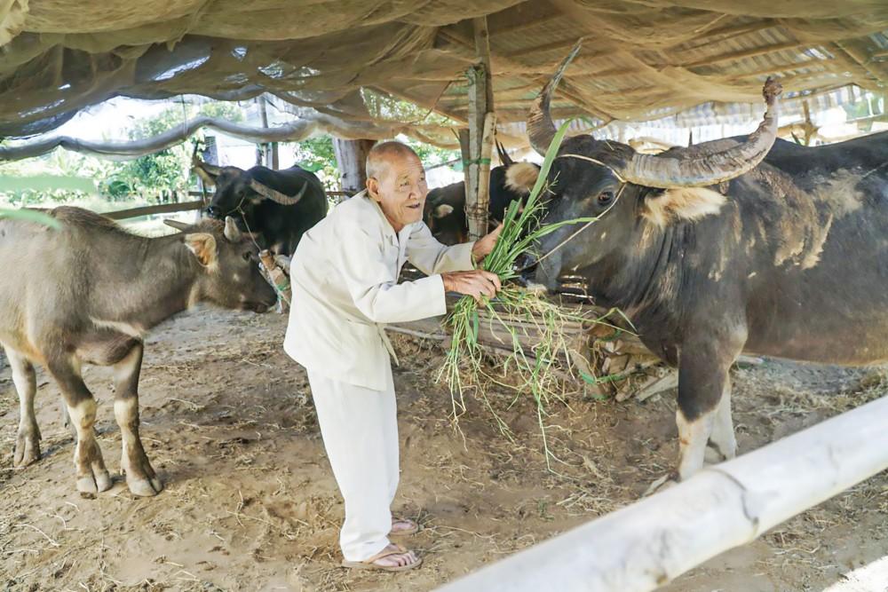 Dù đã 83 tuổi, nhưng ngày vài bận ông Đực lại ra chuồng thăm đàn trâu. Ảnh: Bình Nguyên