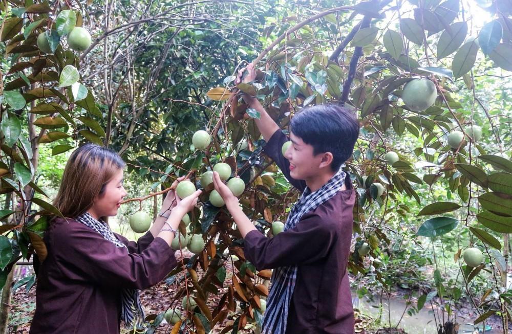 Du khách tham quan tại vườn trái cây Phong Điền.