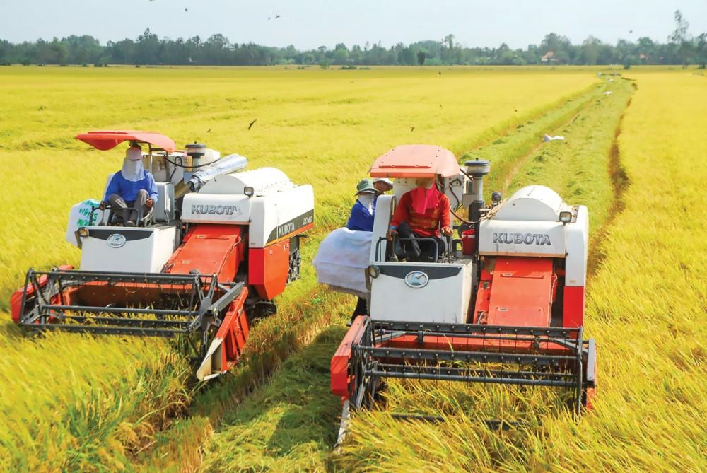 Thu hoạch lúa trên cánh đồng lớn. Ảnh: G.B