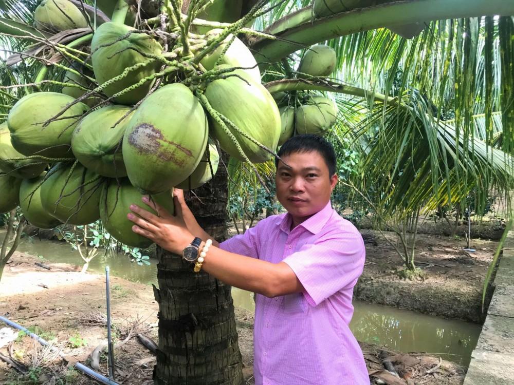 Anh Đặng Minh Bé giới thiệu vườn dừa sáp của gia đình.