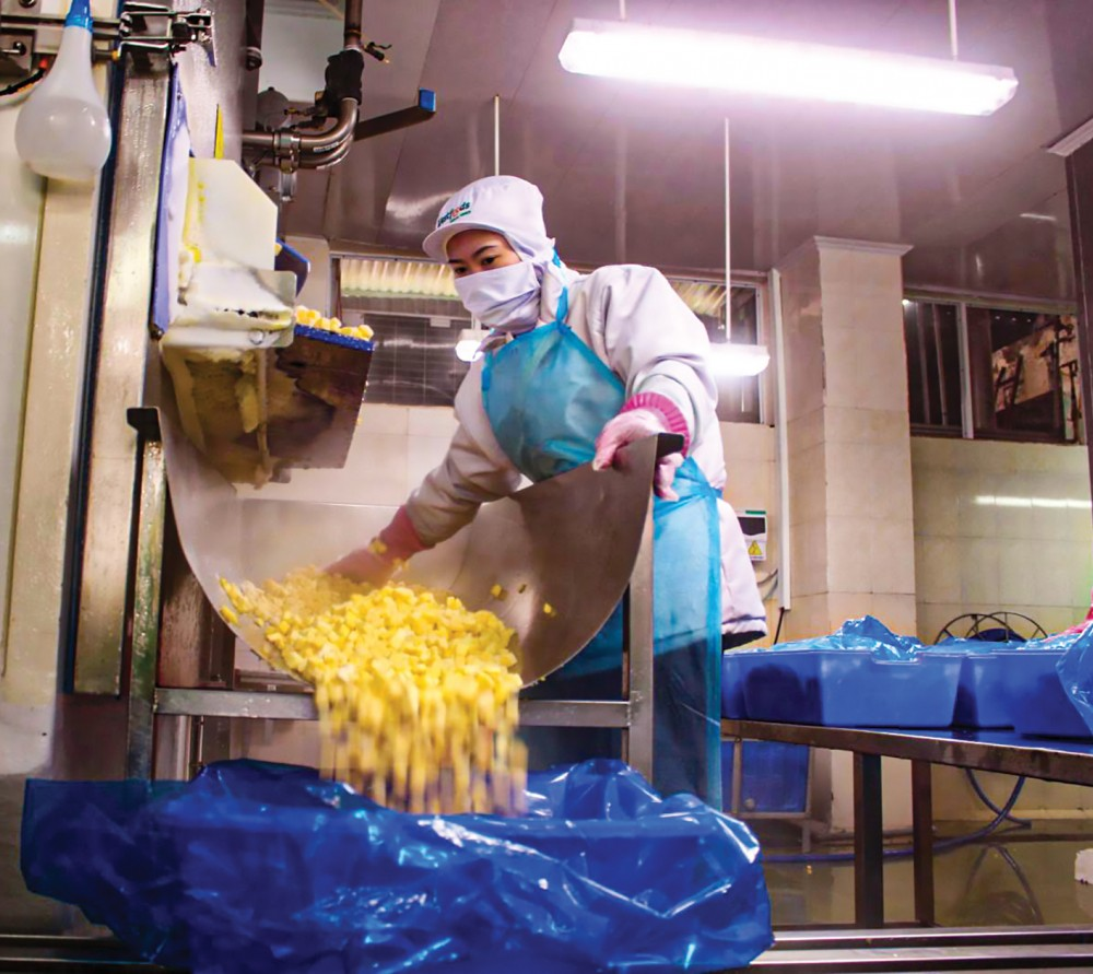 Chế biến trái cây xuất khẩu tại Công ty CP Chế biến thực phẩm xuất khẩu Miền Tây.