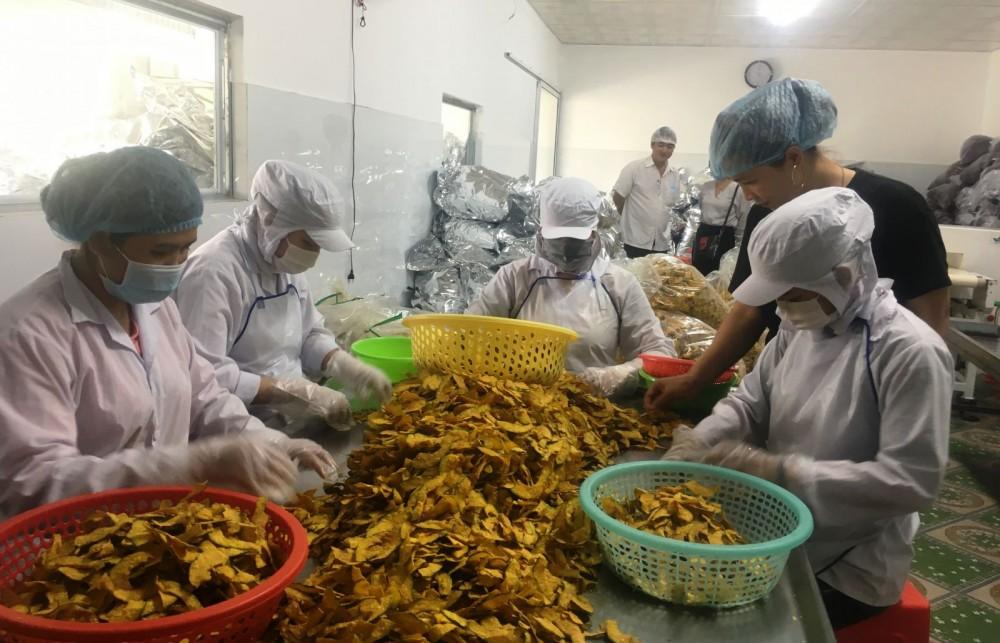 Hiện nhiều doanh nghiệp ở các tỉnh, thành vùng ĐBSCL ngày càng chú trọng áp dụng tốt các tiêu chuẩn vào quy trình sản xuất... (Trong ảnh: Hoạt động chế biến rau củ sấy tại một doanh nghiệp ở huyện Bình Tân, tỉnh Vĩnh Long).