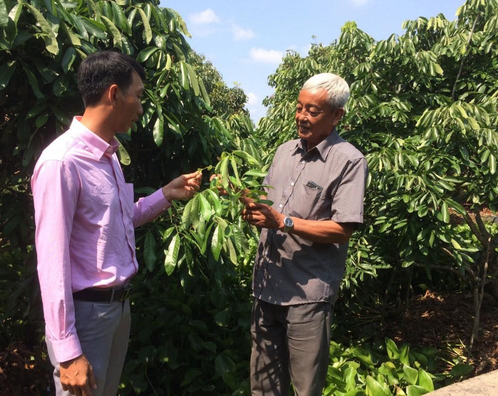 Cán bộ HND phường Long Hưng cùng ông Coi (bìa phải) trao đổi kỹ thuật xử lý nhãn Idor ra hoa.