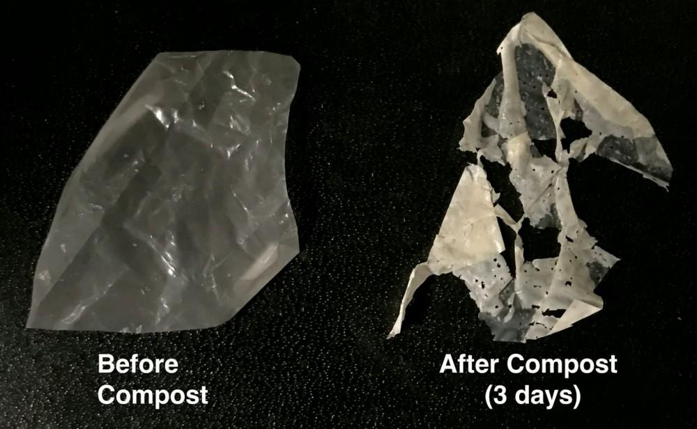 Nhựa sinh học do Đại học California, Berkeley phát triển (trái) đã phân hủy sau 3 ngày đặt trong lớp phân trộn tiêu chuẩn (phải).