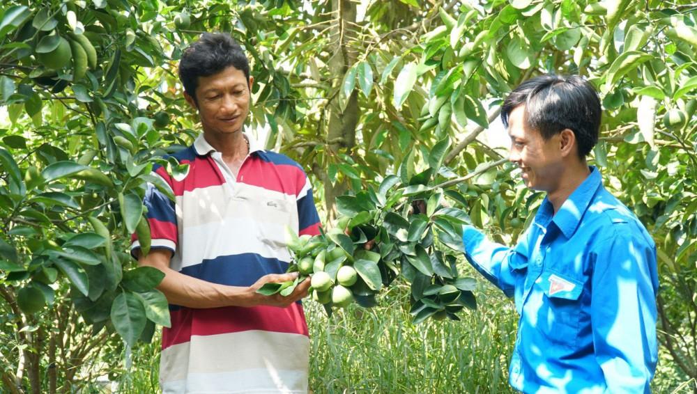 Anh Nguyễn Quốc Hội (bên trái) chia sẻ kinh nghiệm trồng cam xoàn đạt hiệu quả cao.