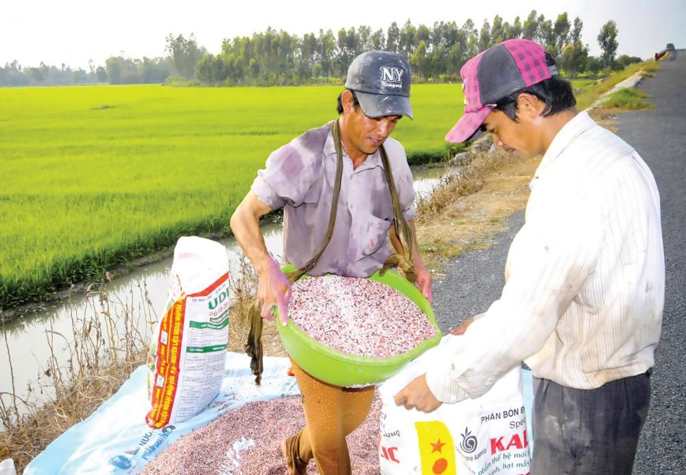 Hiện ĐBSCL đang vào vụ sản xuất lúa hè thu nên sử dụng lượng phân bón khá lớn. Ảnh chụp tại một cánh đồng ở huyện Mang Thít, tỉnh Vĩnh Long. Ảnh: LÊ VŨ