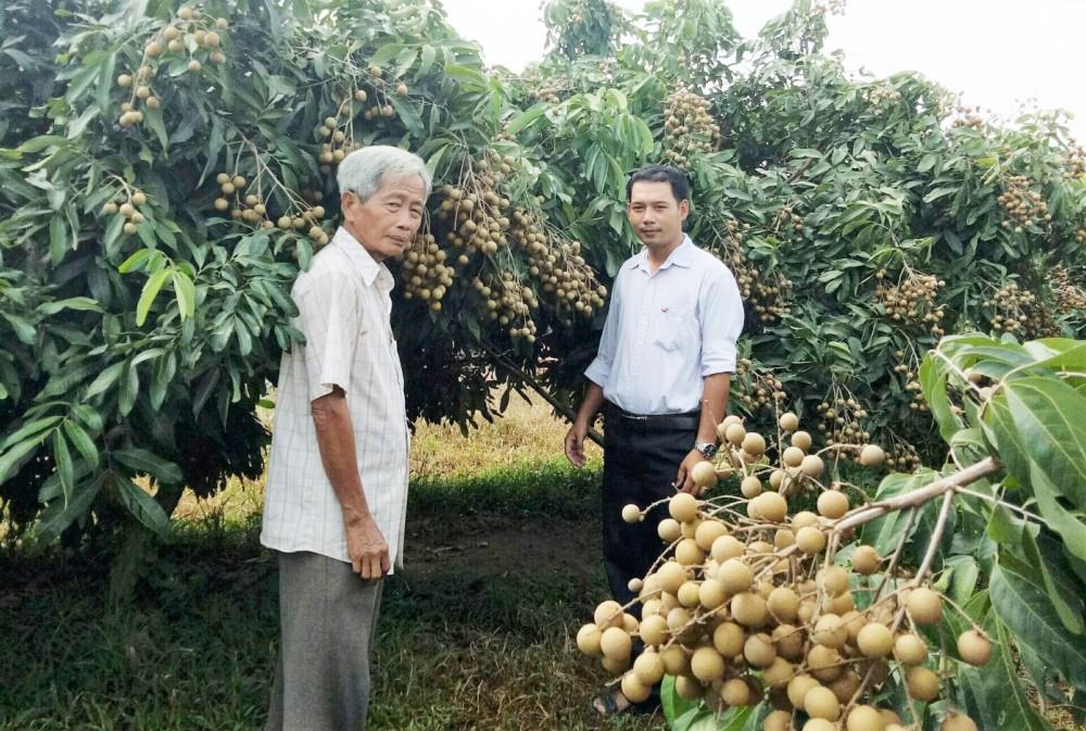 Anh Lê Sơn Tùng, Chủ tịch Hội Nông dân xã (bên phải) nắm bắt tình hình sản xuất mô hình trồng nhãn IDO ở ấp Định Khánh A.
