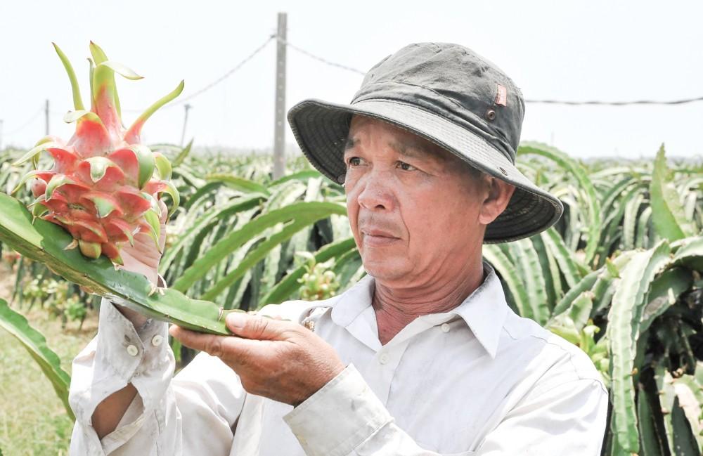 Nông dân xã Kiểng Phước, huyện Gò Công Đông (Tiền Giang) chuyển đổi đất lúa kém hiệu quả sang trồng thanh long và được DN bao tiêu đầu ra.