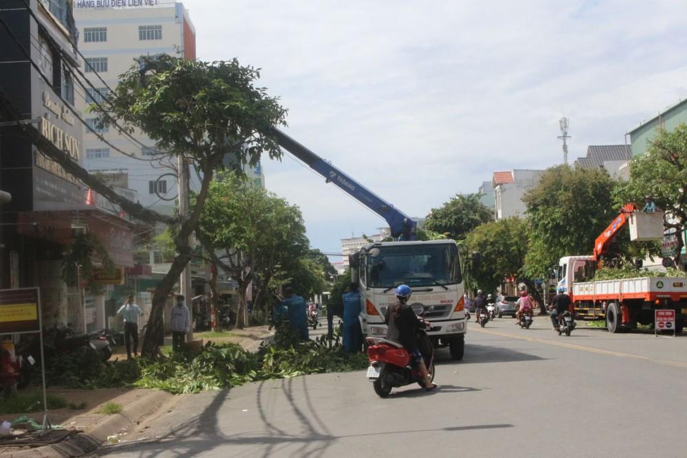 Đơn vị chuyên môn cắt tỉa cây xanh trên địa bàn quận Ninh Kiều, hạn chế cây xanh đổ ngã, ảnh hưởng người đi đường.