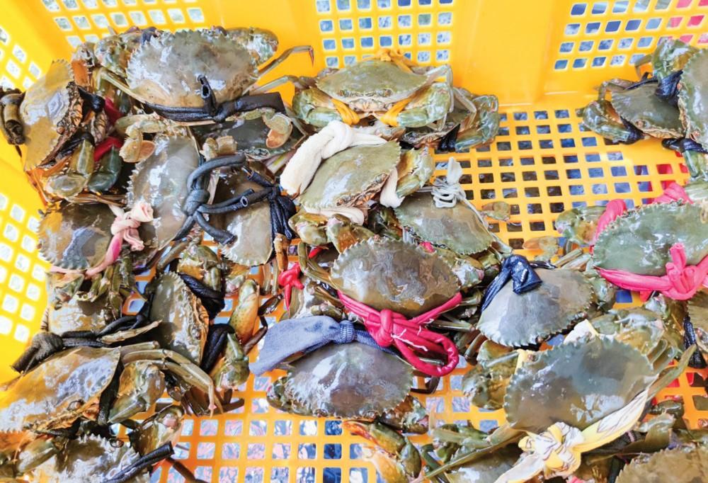 Cua biển được bày bán tại một điểm kinh doanh hải sản ở quận Ninh Kiều, TP Cần Thơ.