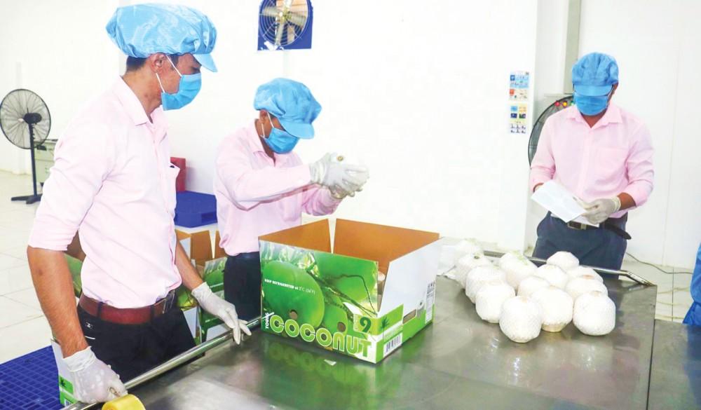 Chế biến dừa phục vụ xuất khẩu tại một doanh nghiệp ở tỉnh Bến Tre.