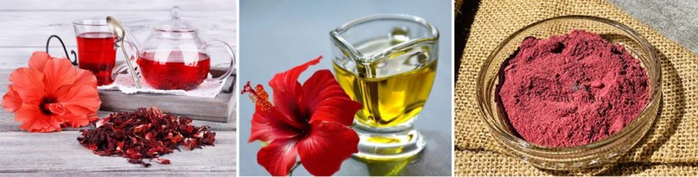 Dâm bụt có thể dùng chữa bệnh dưới dạng trà, dầu hoặc bột.