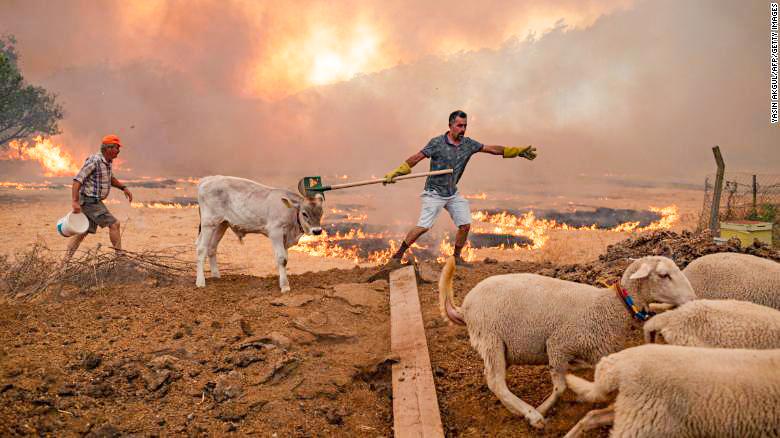 Người dân Thổ Nhĩ Kỳ bảo vệ gia súc trước những đám cháy rừng. Ảnh: CNN