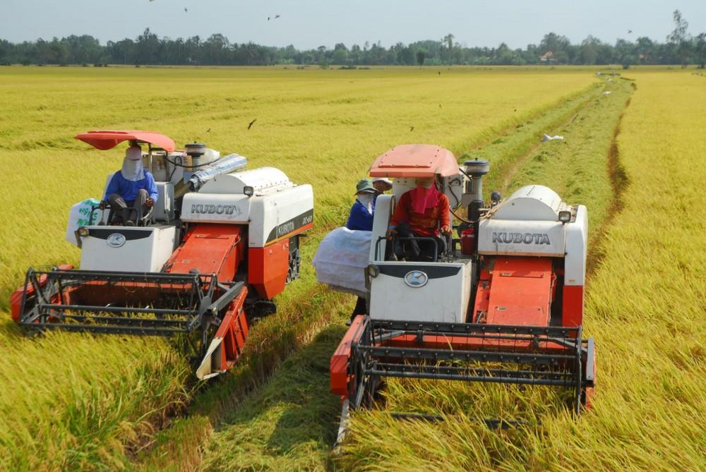 Các TCTD đang đẩy mạnh cho DN vay thu mua lúa, gạo xuất khẩu. Ảnh: T.HÀ