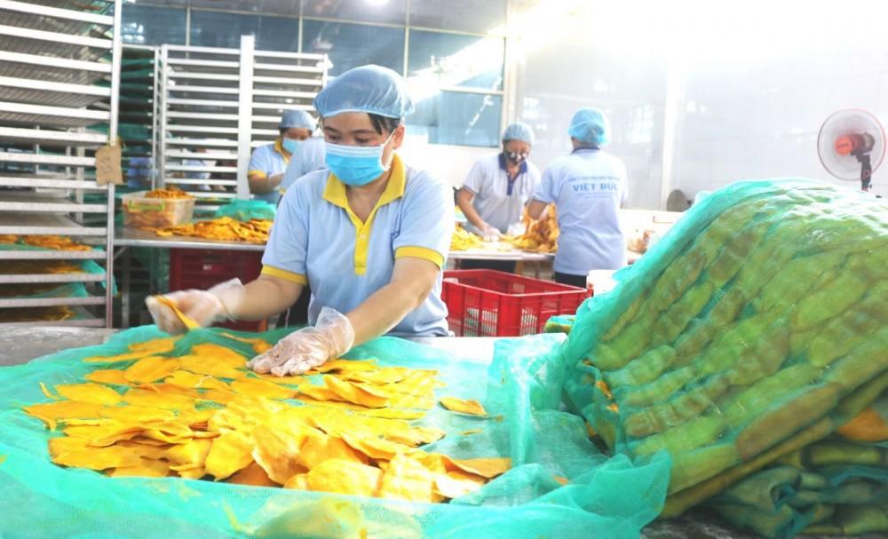 Chế biến xoài sấy dẻo xuất khẩu tại một doanh nghiệp ở huyện Thanh Bình, tỉnh Đồng Tháp.