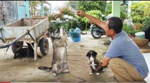 Chuyện lạ miền Tây: chó biết lạy, xin tiền, làm toán!