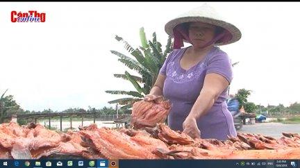 Xóm nghề khô cá lóc ở Cần Thơ