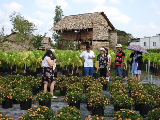 Bao bọc khu nhà nghỉ của ông Phong là những cánh đồng hoa 4 mùa khoe sắc, gió trời lồng lộng. Hiện khu nhà nghỉ thu hút rất nhiều du khách, đặc biệt là khách quốc tế.
