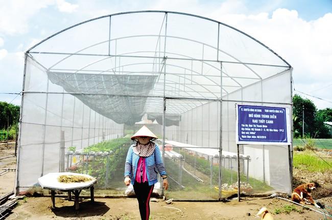 Vườn rau thủy canh của chị Nhàn chủ yếu trồng các loại rau, như: xà lách, dưa leo, cải ngọt, xà lách xoong Nhật Bản, cải thìa, cải bẹ dung, rau muống… Trung bình mỗi tháng, vườn rau sản xuất và cung ứng khoảng 1-2 tấn rau các loại, lợi nhuận khoảng 20 triệu đồng. Hiện nay rau thủy canh của chị Nhàn có mặt các siêu thị ở Trung tâm tỉnh An Giang, sản lượng luôn không đủ đáp ứng cho thị trường.