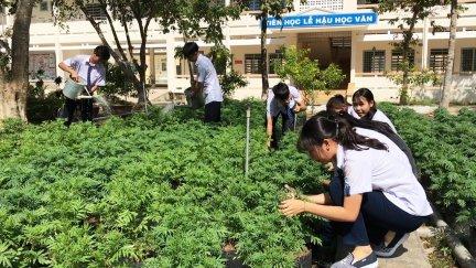 Hoa thơm, rau sạch trồng khắp sân trường