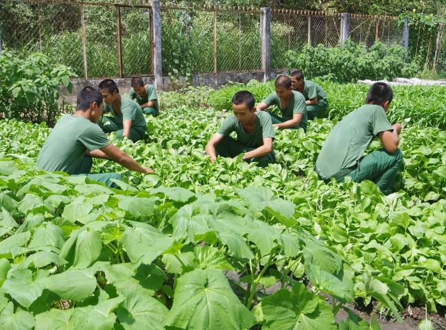 Tất cả các đơn vị trong tỉnh đều tự túc được nguồn rau xanh, sạch phục vụ bữa ăn hàng ngày cho bộ đội; quân số khỏe tham gia huấn luyện luôn đạt trên 95%.