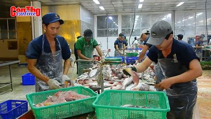 Tái cơ cấu để ngành cá tra phát triển bền vững