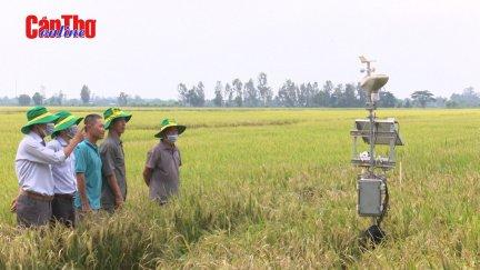 Dự án VnSAT hỗ trợ nông dân Cần Thơ nâng cao chuỗi lúa gạo