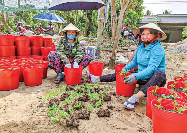 Nông dân xuống giống thêm vạn thọ và nhiều nhiều loại hoa ngắn ngày để phục vụ thị trường Tết.
