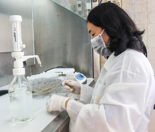 Công đoạn kiểm tra độ thơm của các giống lúa trong phòng thí nghiệm.