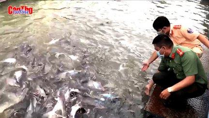 Kỳ lạ đàn cá thiên nhiên hàng ngàn con trên sông Hậu
