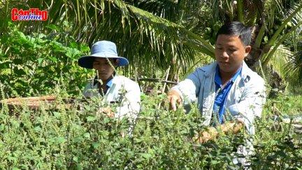 Khởi nghiệp với mô hình trồng cây dược liệu