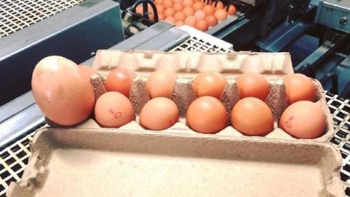 """""""Quả trứng gà khổng lồ"""" theo kiểu trứng lồng trứng"""