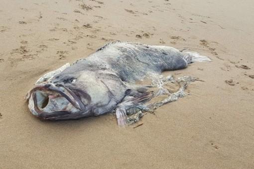 """Cặp vợ chồng phát hiện ra xác """"quái vật biển"""" ở bờ biển Australia"""