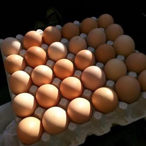 Thu hồi hơn 200 triệu quả trứng gà nghi nhiễm salmonella
