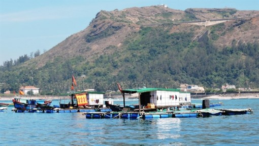 Funds allocated to preserve Ly Son Marine Protected Area