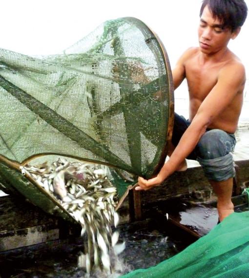 Nhớ mùa cá linh