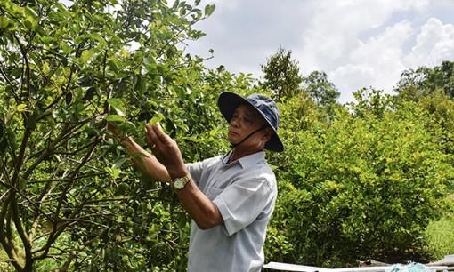 Kinh tế hợp tác-tiền đề thúc đẩy xây dựng nông thôn mới