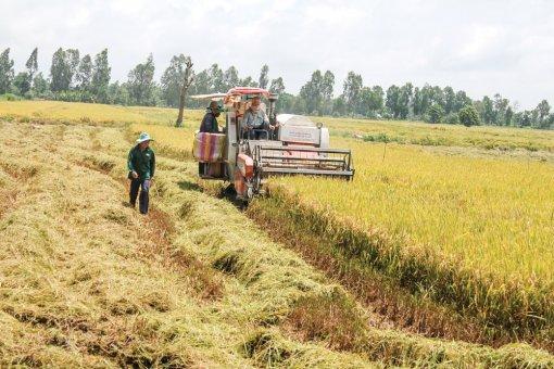 """Phát triển """"Cánh đồng lớn"""", sản xuất lúa chất lượng cao"""