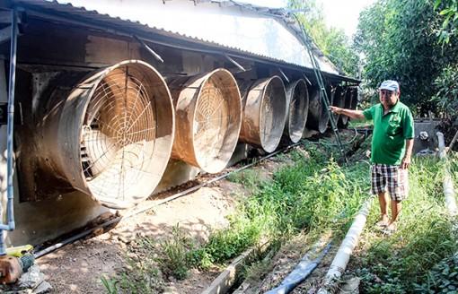 Chăn nuôi heo  gây ô nhiễm môi trường