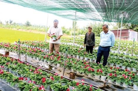Nông dân Cần Thơ sản xuất nhiều loại hoa kiểng phục vụ Tết