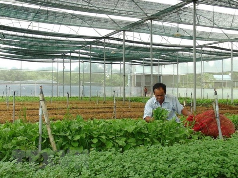 ADB assists high-tech agriculture development in Can Tho city